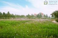 Độc quyền Hải Phát Land phân phối dự án The Phoenix Garden giá chỉ 19 triệu/m2. Diện tích 200m