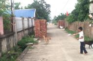 Lô góc 2 mặt tiền 388m2 tại thôn 2 Phú Cát