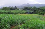 Đất trang trại x.Bắc Sơn Sóc Sơn,7500m2 MT 80m, đường ô tô, 4.1 tỷ