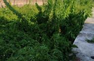 Bán mảnh đất 36m2 tại Đông Dư  - Gia Lâm - Hà Nội
